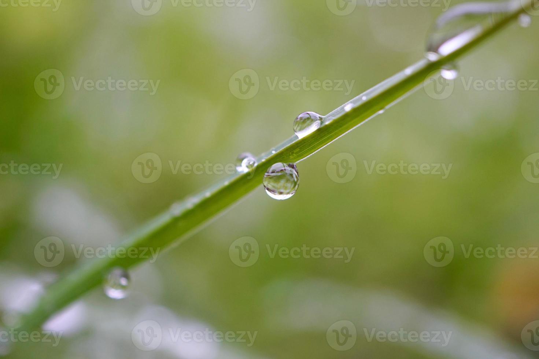 regendruppels op de planten in regenachtige dagen foto