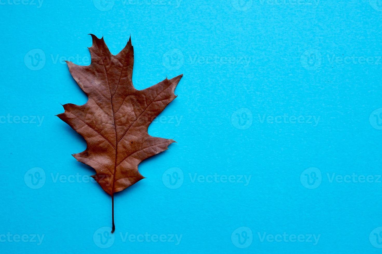 bruine bladeren in de herfst foto