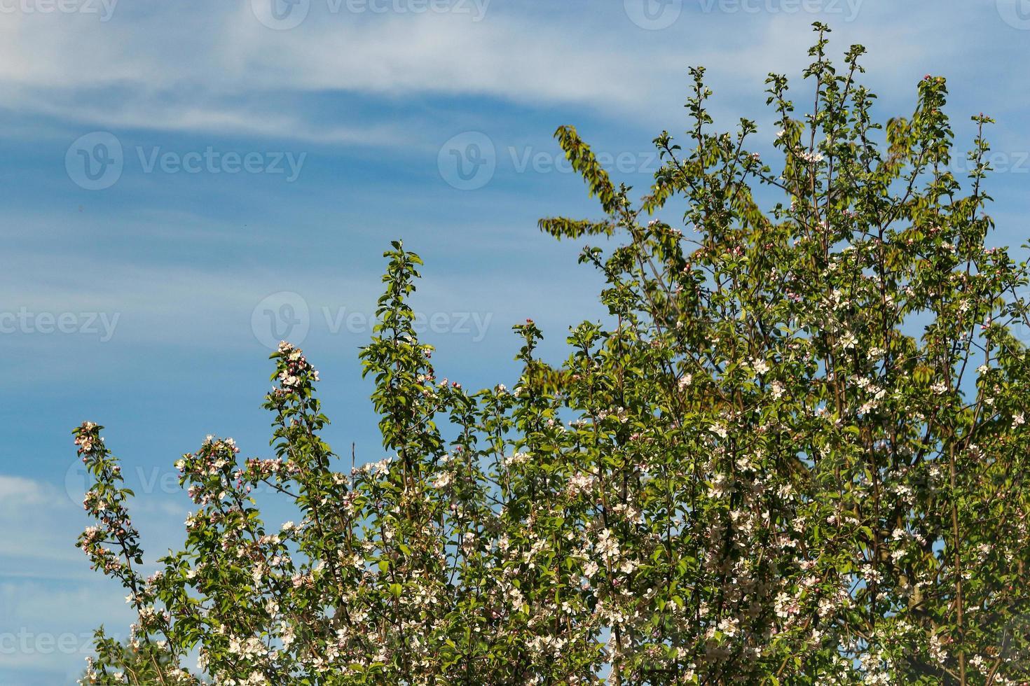 groene boomtakken met bladeren op blauwe lucht met omzoomde wolken foto