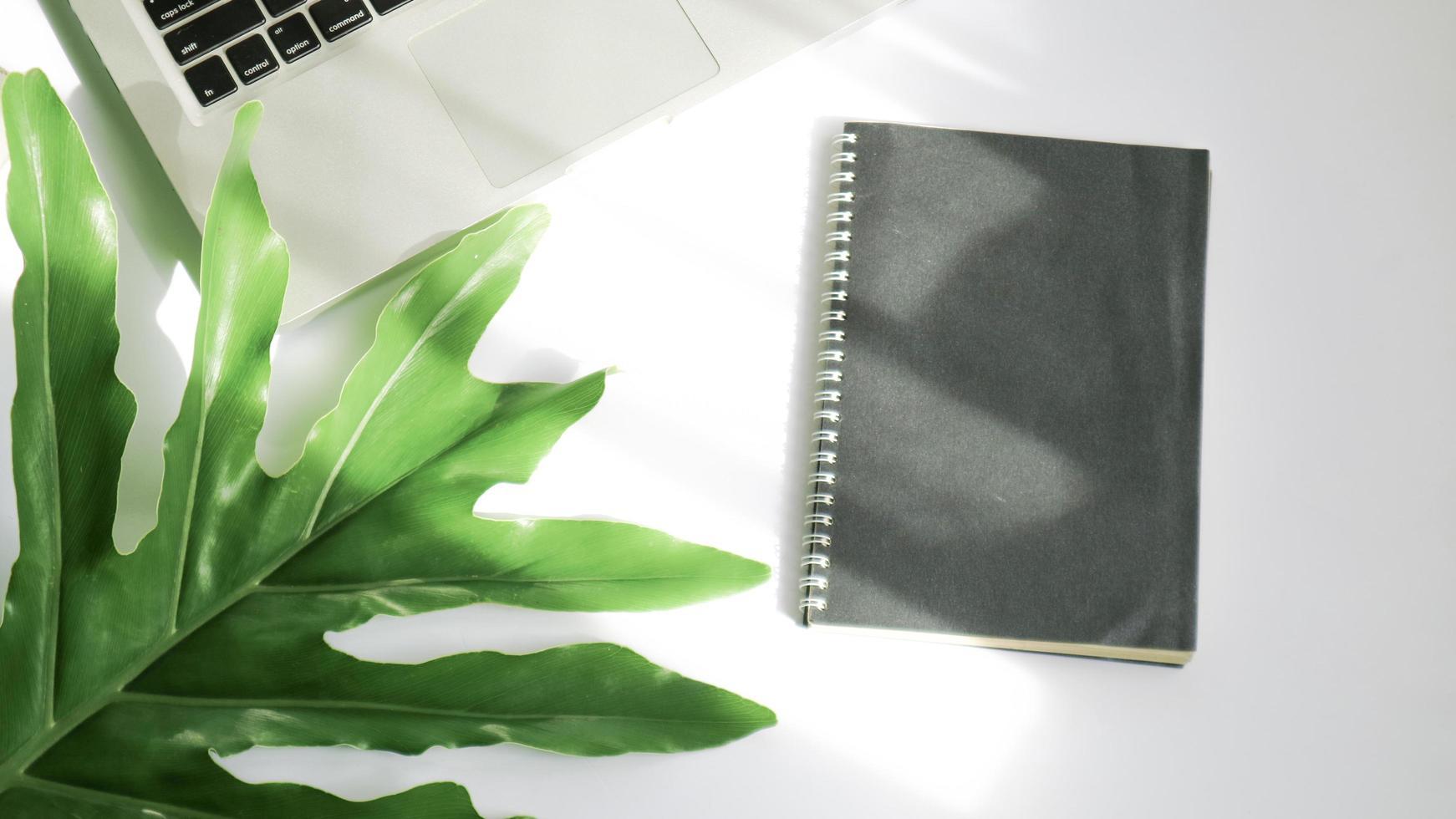 groene bladeren op een witte achtergrond en zonneschijn foto