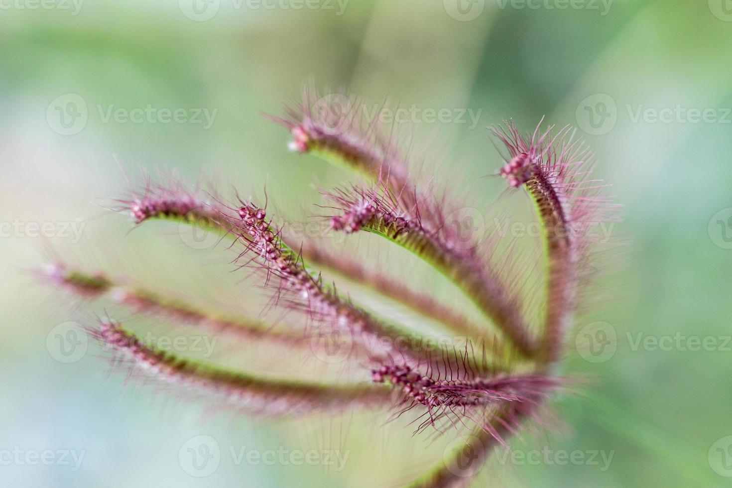 close-up van rood blad met wazige groene achtergrond foto