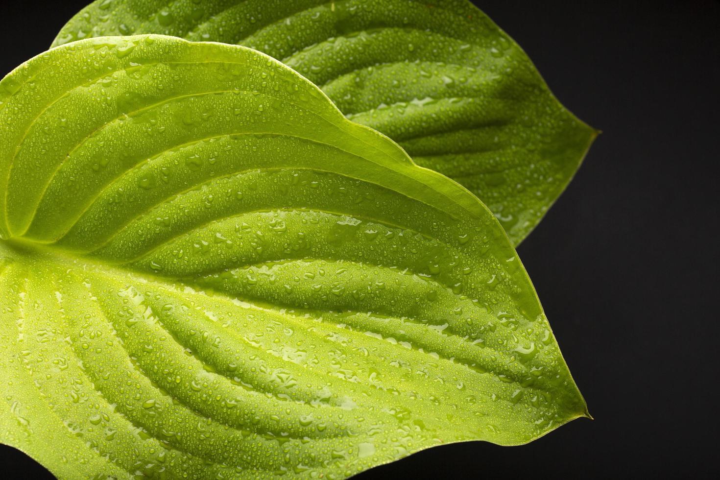 de details van de texturen van de kamerplant foto