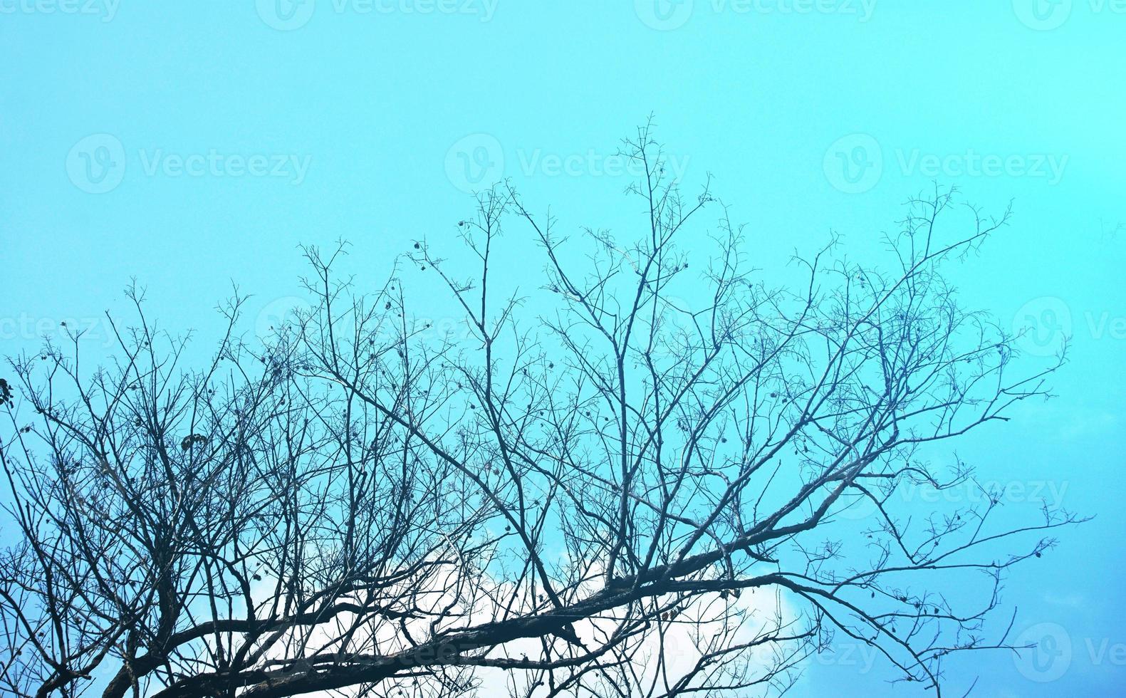 tropische silhouet hoog contrast boom onder de blauwe hemel foto