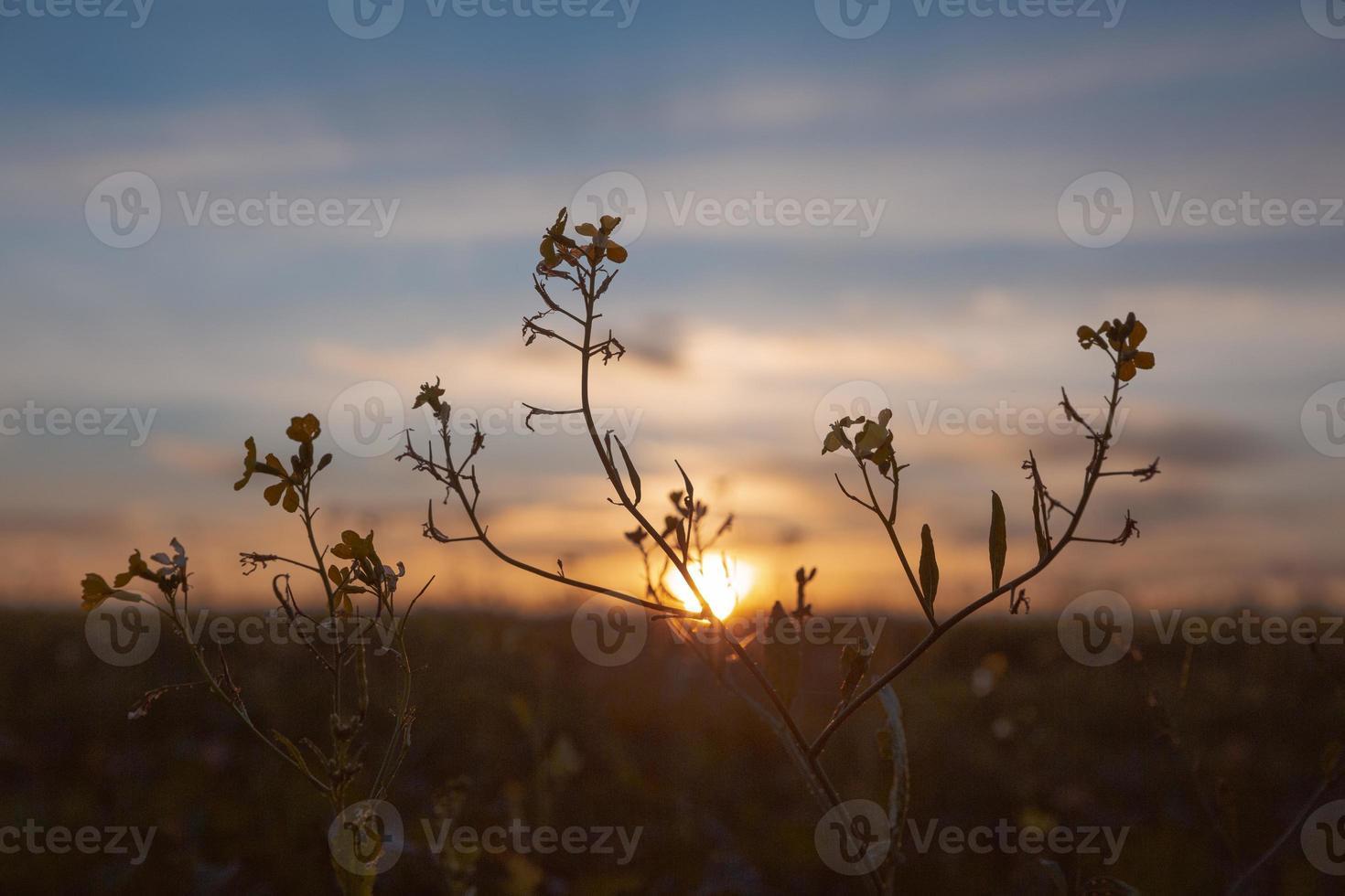 prachtig uitzicht op het ochtendlicht foto