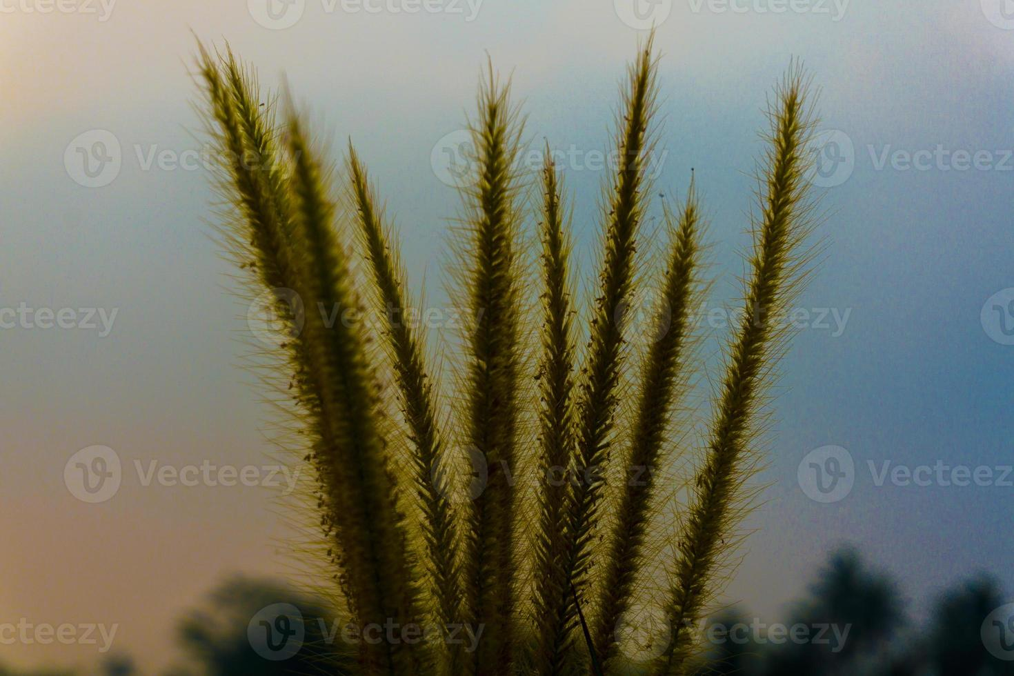 prachtig landschap van riet in het wild foto