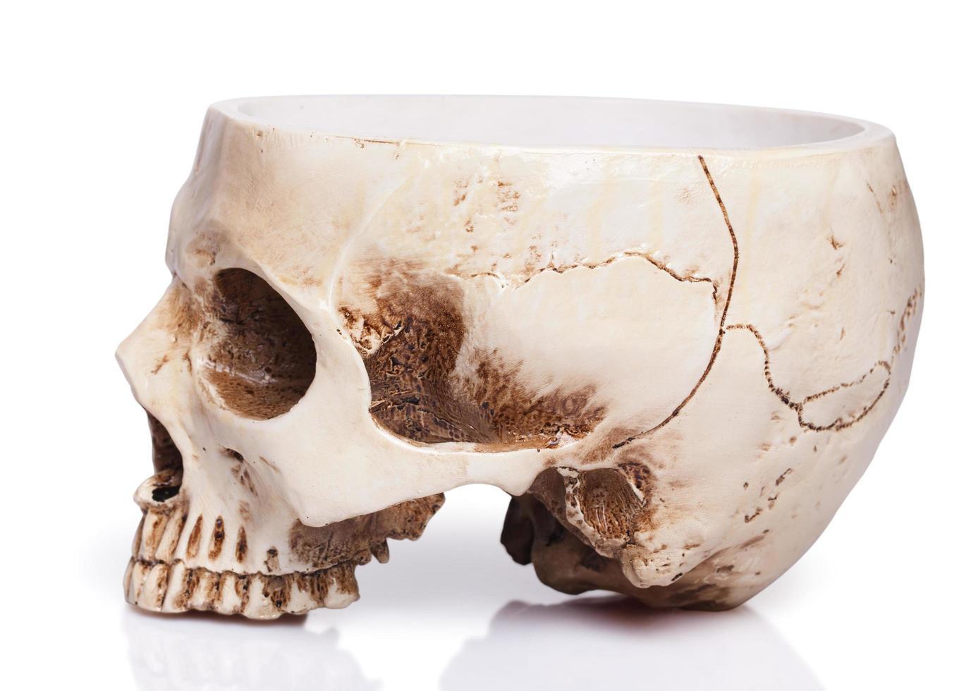 kopje van een menselijke schedel foto