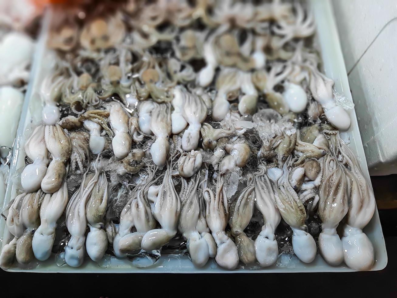 verse rauwe inktvis. rauwe inktvis met ijs in de marktkraam voor zeevruchten foto