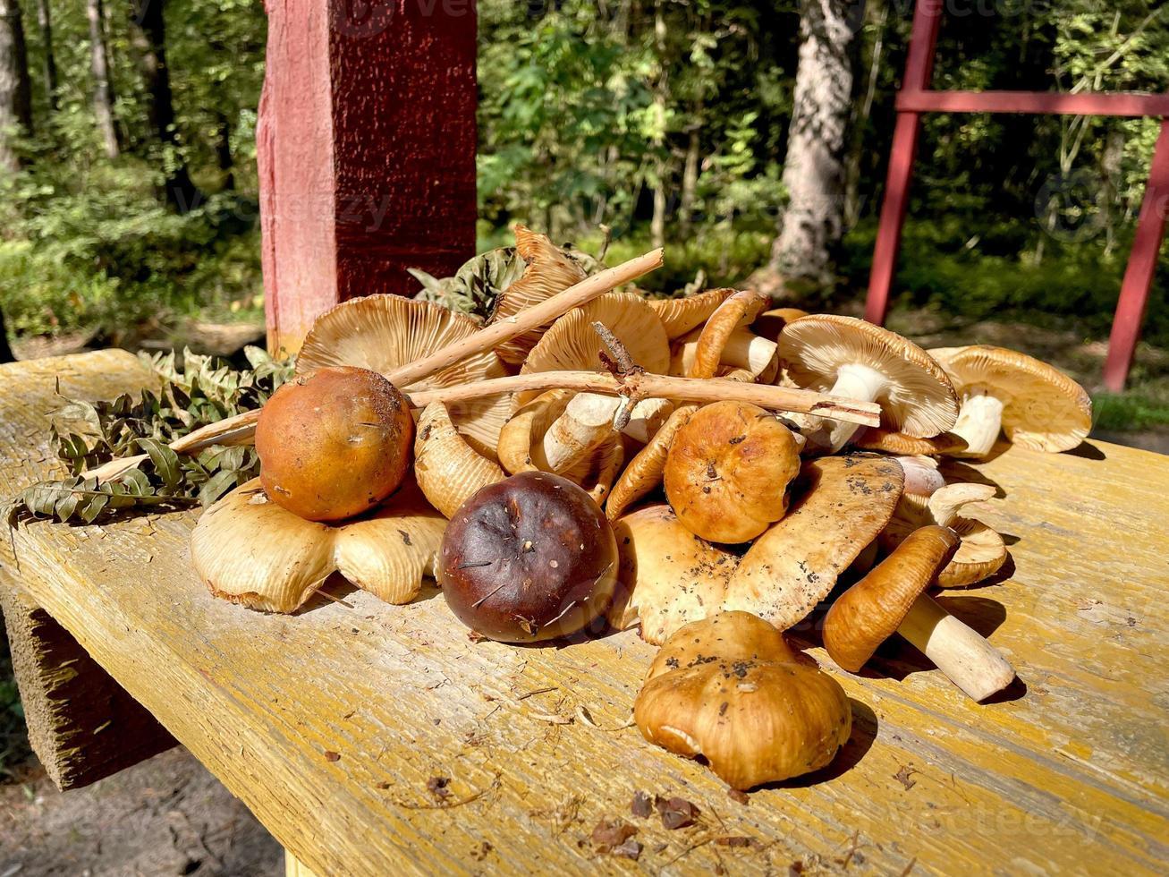 een verstrooiing van verschillende paddenstoelen op een houten tafel in het bos foto