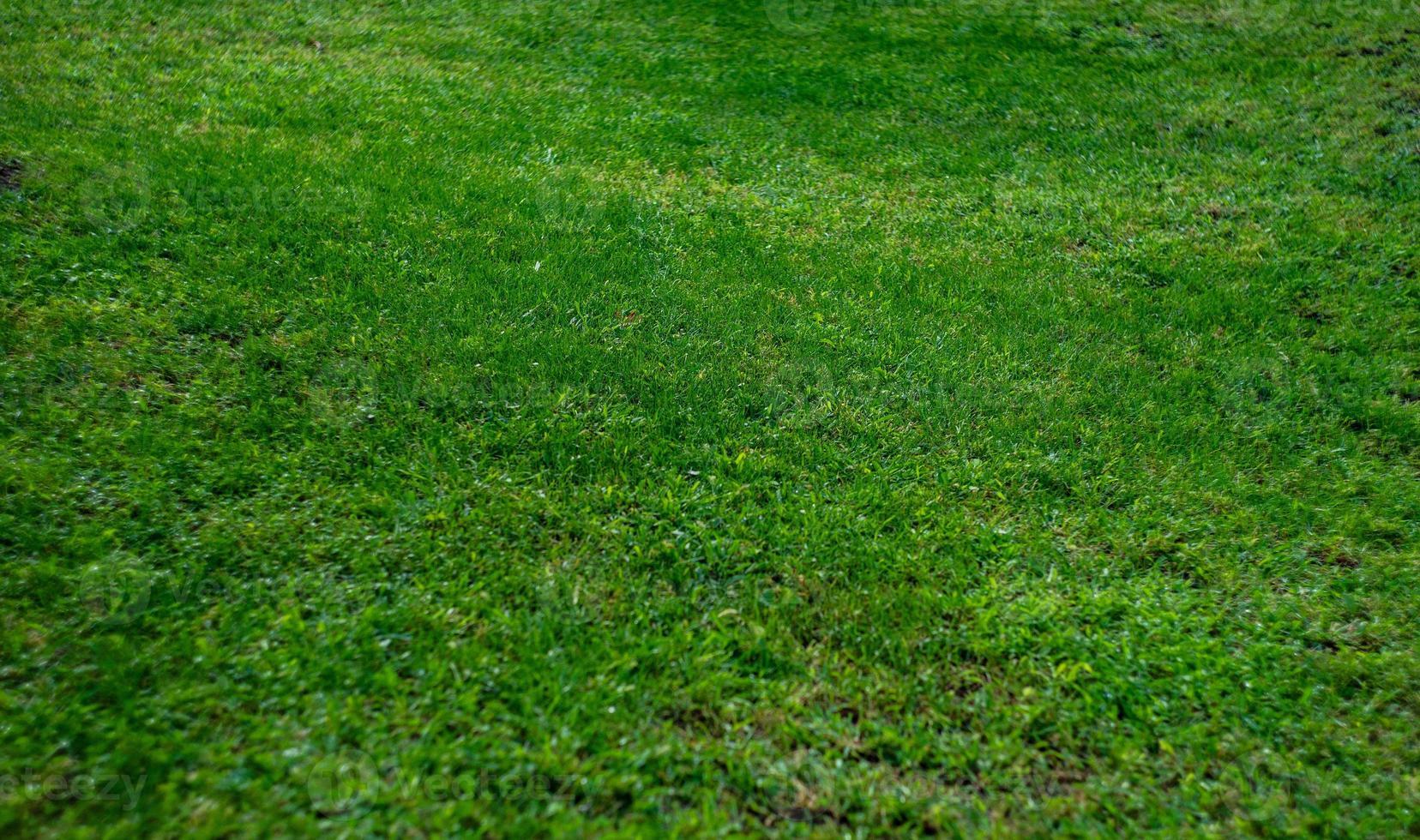 zomer achtergrond met groen gras foto