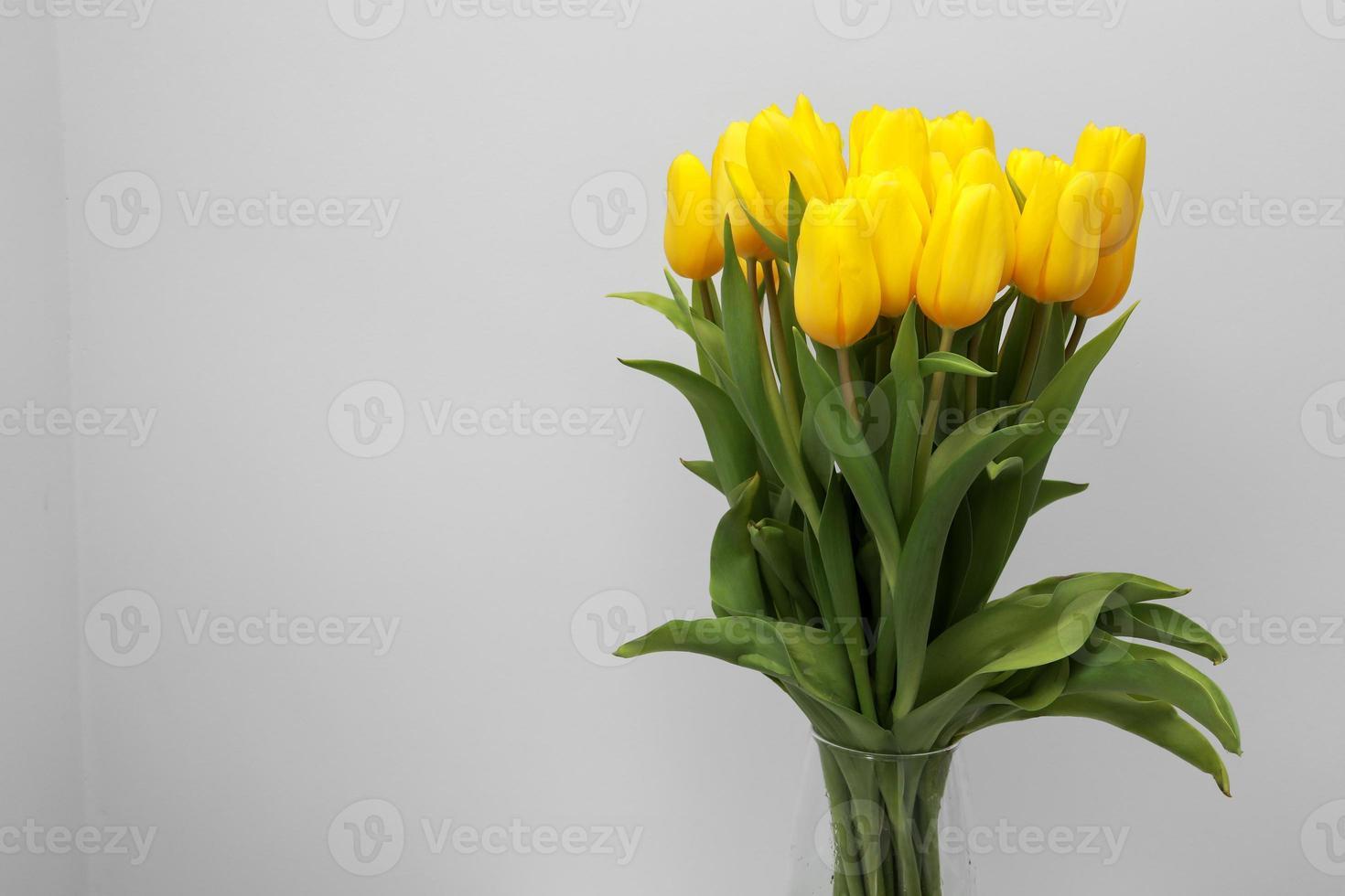 gele tulp bloemen geïsoleerd op een witte achtergrond, voor uw creatieve ontwerp en decoratie foto