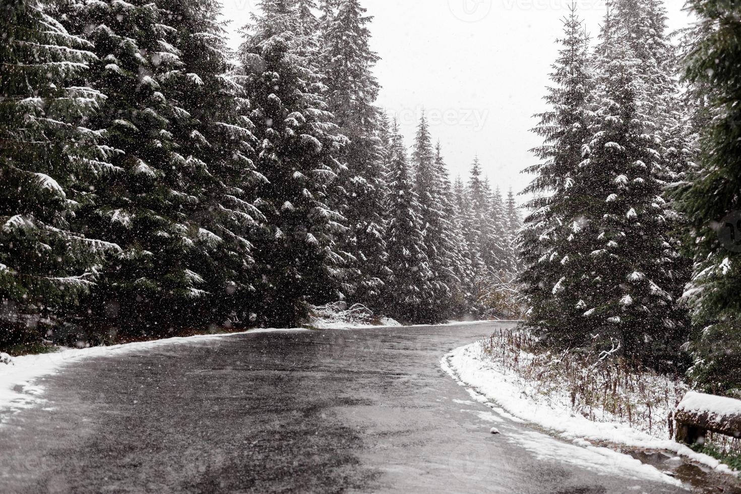 schilderachtig uitzicht op de weg met sneeuw en bergen en gigantische bomen achtergrond in het winterseizoen. morske oko foto