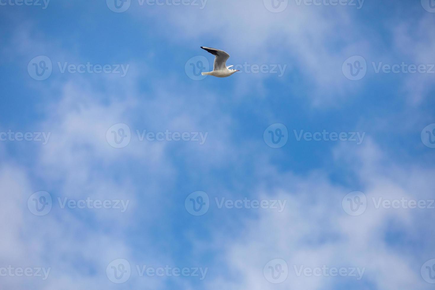 vogel vliegende zeemeeuw geïsoleerde hemel symbool van vrijheid concept. witte zeemeeuw in de lucht foto