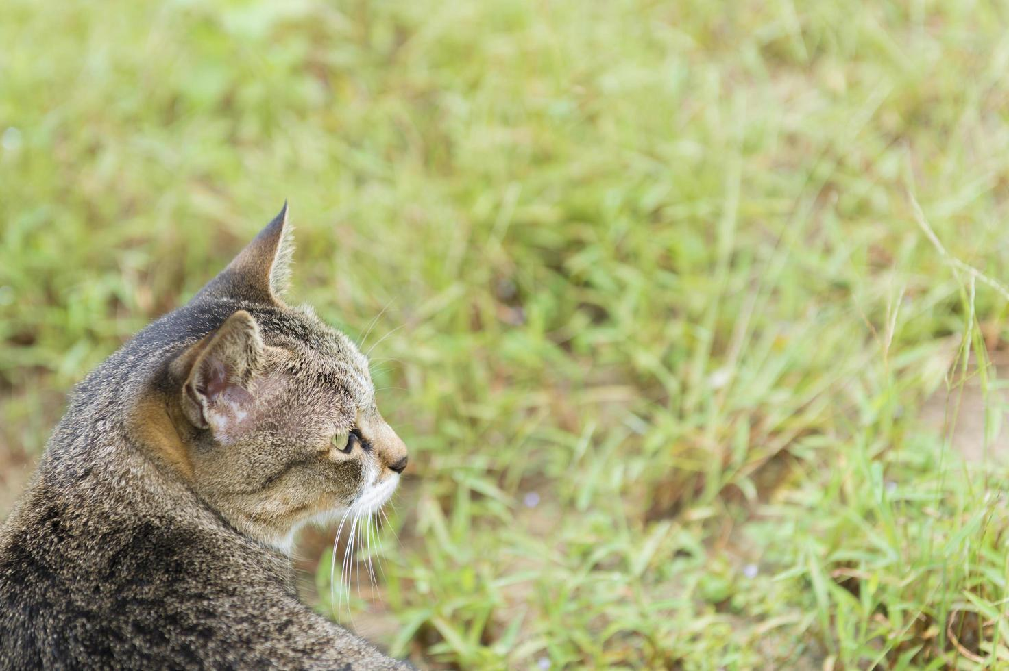 kat op zoek naar groen gras op de natuur achtergrond foto