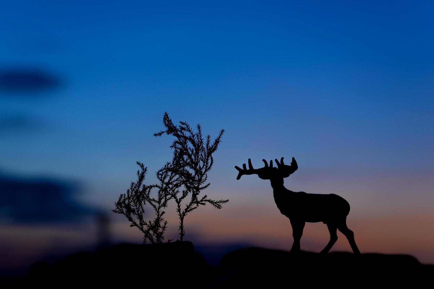 elandsilhouet bij zonsondergangachtergrond foto