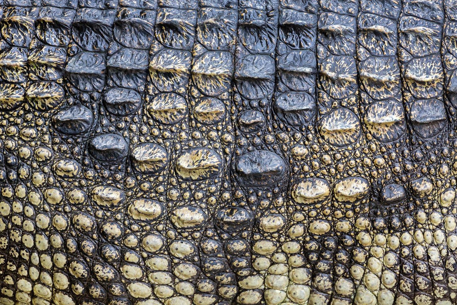 kleurrijke patronen en huid van de krokodil. foto