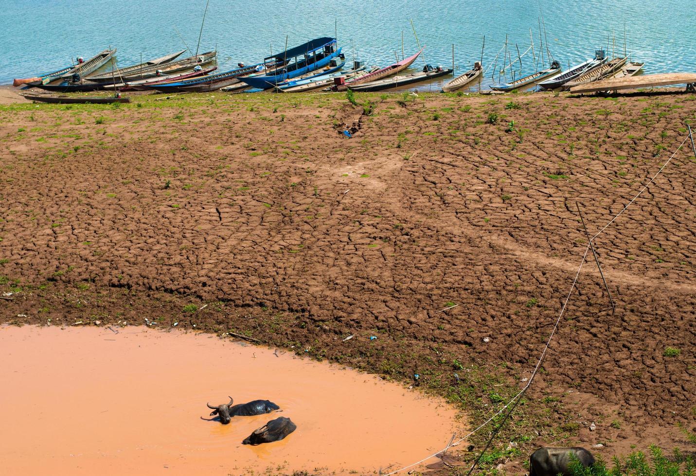 buffel ontspannen in een modderpoel bij de mekong rivier foto