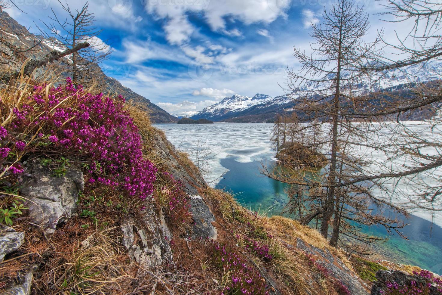 dooi in hoge bergen met lentebloemen en half bevroren meer, engadiner dal bij sankt moritz foto
