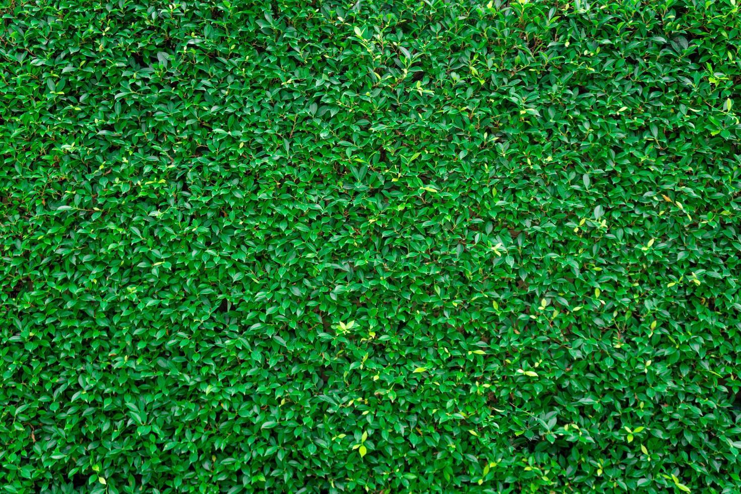 gras muur textuur en achtergrond foto