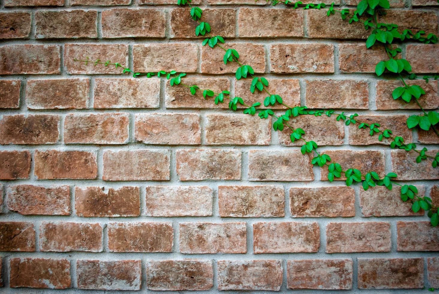 klimop op bakstenen muur met kopieerruimte foto