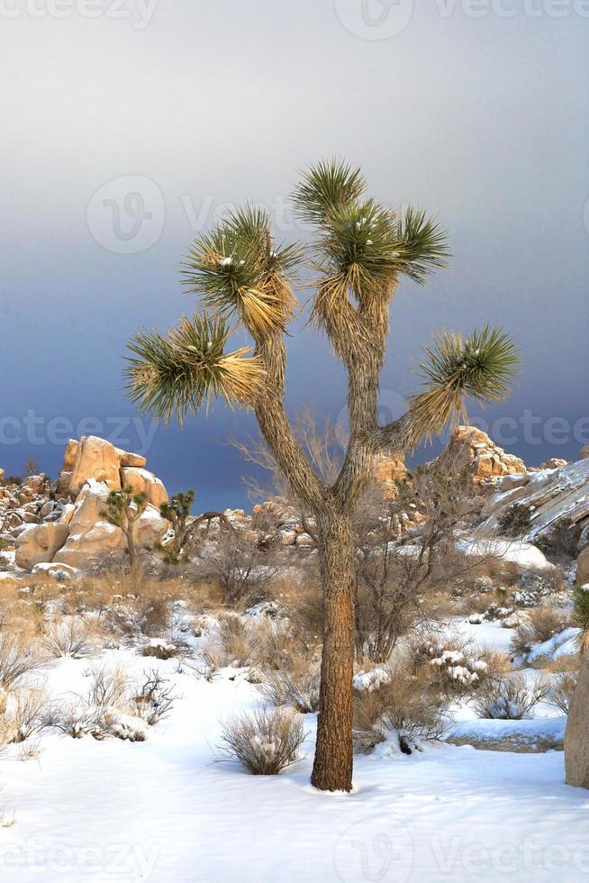 besneeuwd landschap in joshua tree nationaal park foto