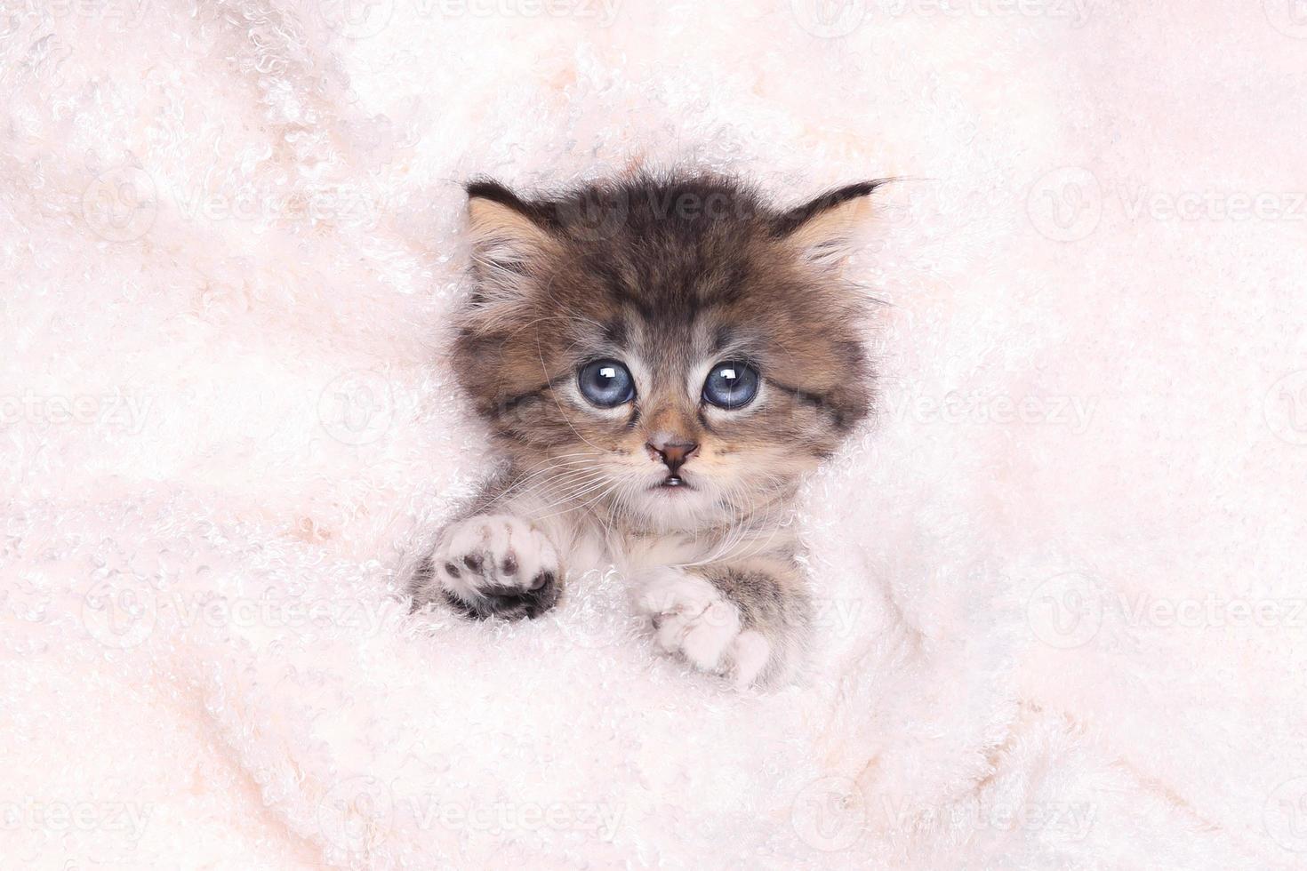 kitten liggend in bed met deken foto