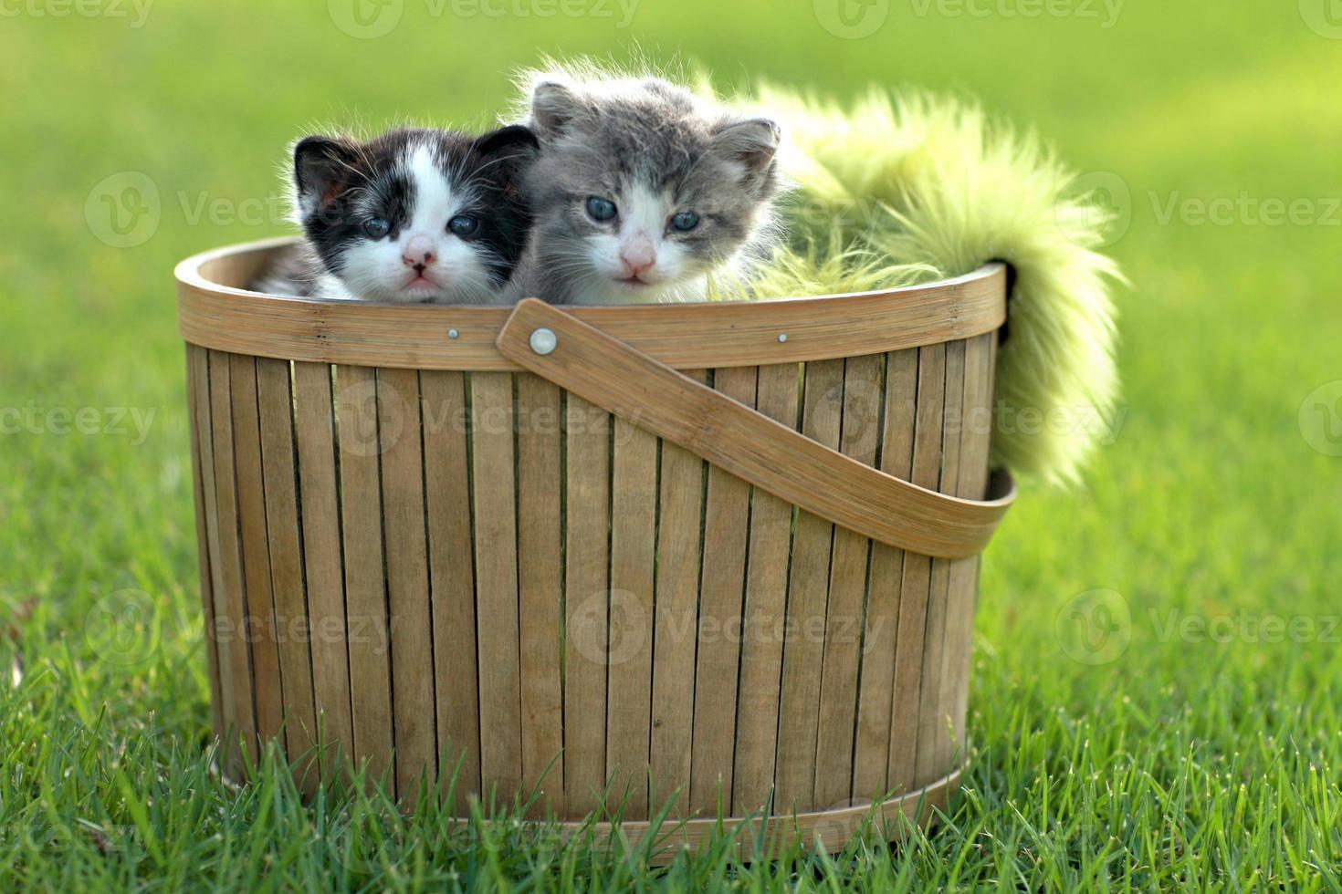 kittens buiten in natuurlijk licht foto