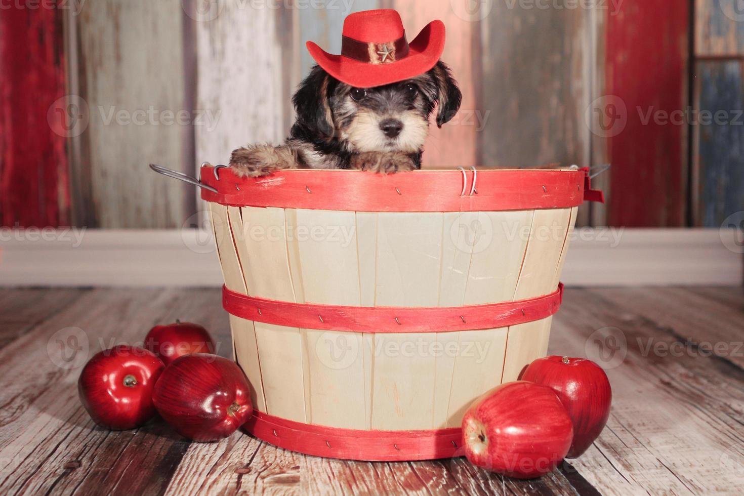 schattige theekopje yorkie puppy in schattige achtergronden en prop voor kalender of kaarten foto