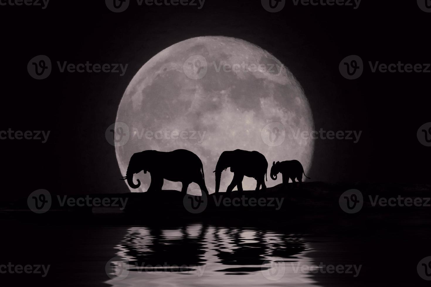 mooi silhouet van Afrikaanse olifanten bij moonrise foto