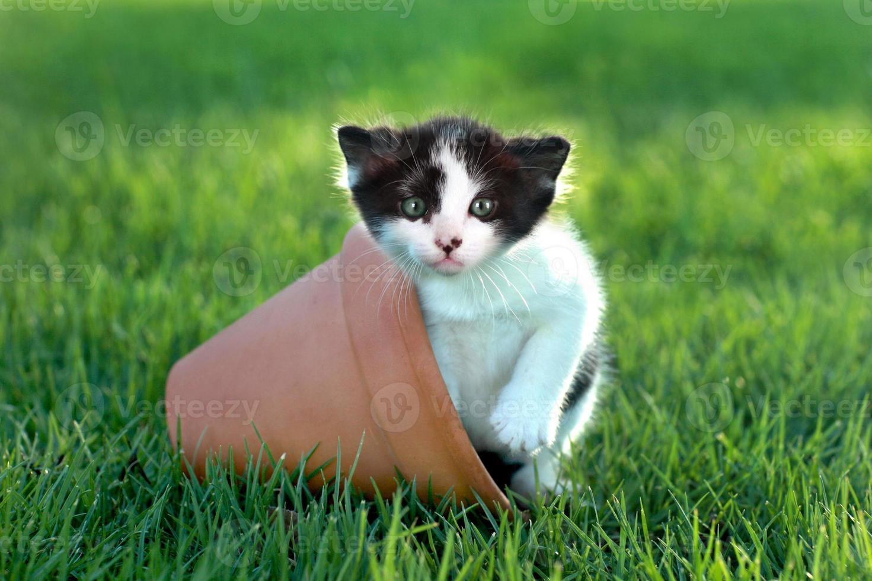 kleine kitten buiten in natuurlijk licht foto