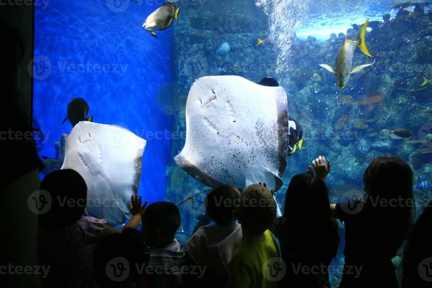pijlstaartroggen in een gigantisch aquarium met kinderen kijken foto
