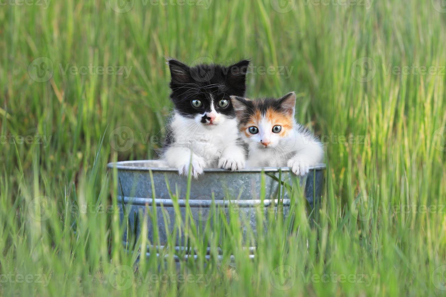 kittens buiten in hoog groen gras foto