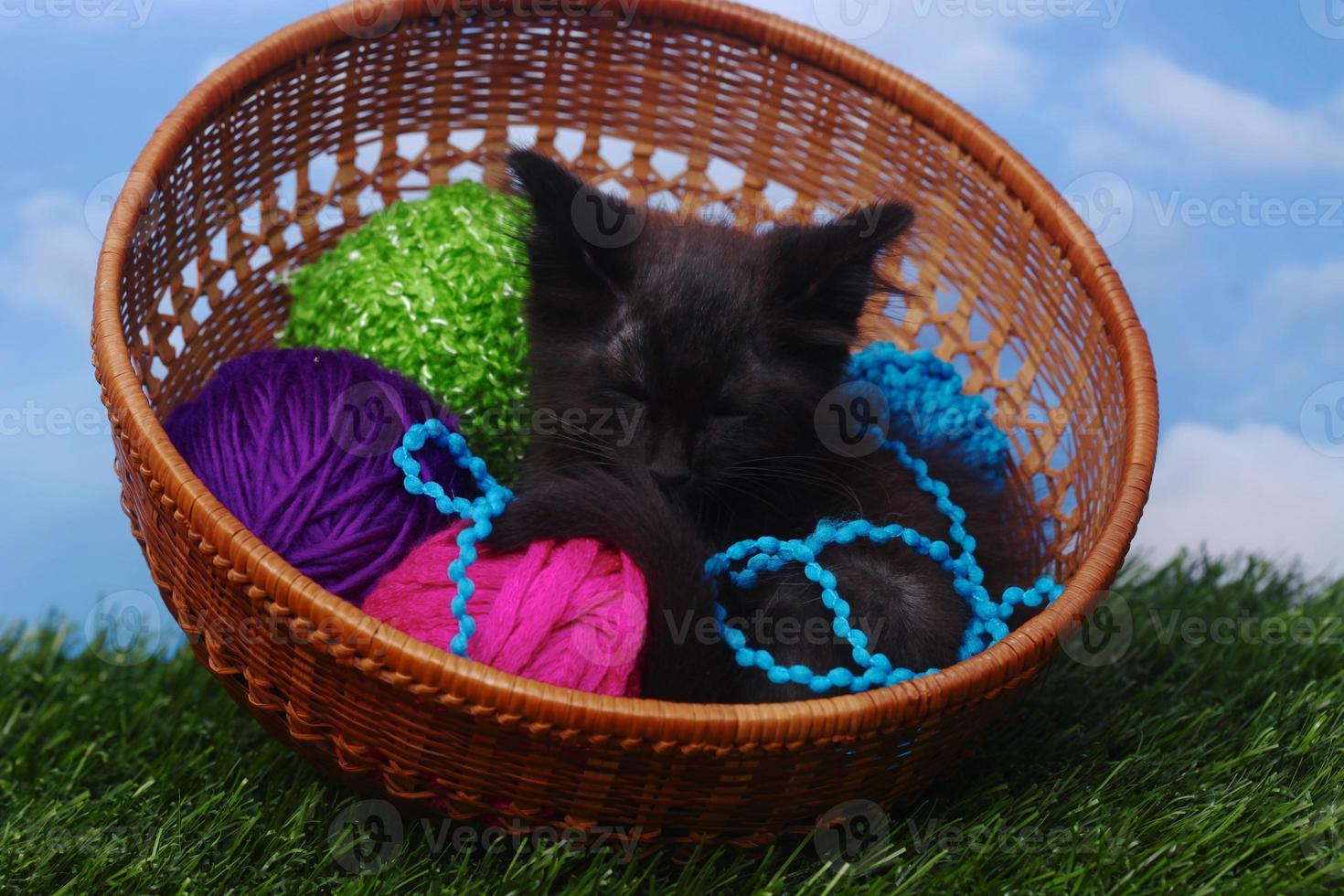schattig katje in een koffer gevuld met garen foto