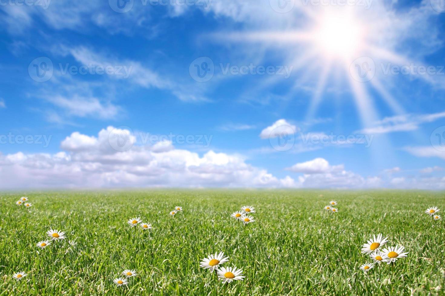 serene zonnige veldweide in het voorjaar foto