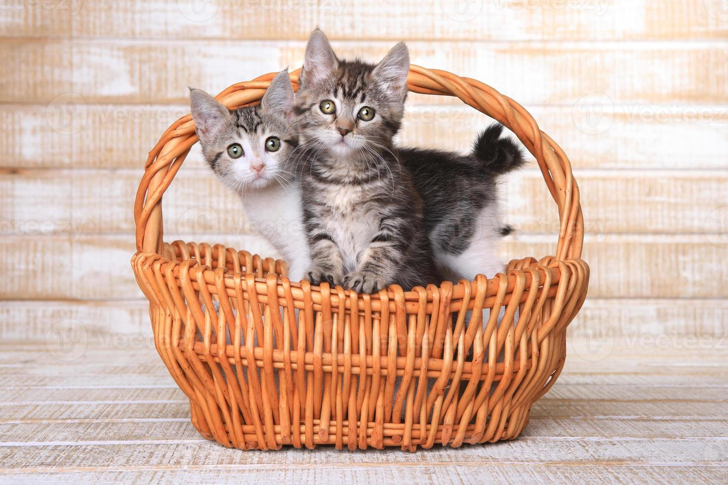 twee adopteerbare kittens in een mand foto