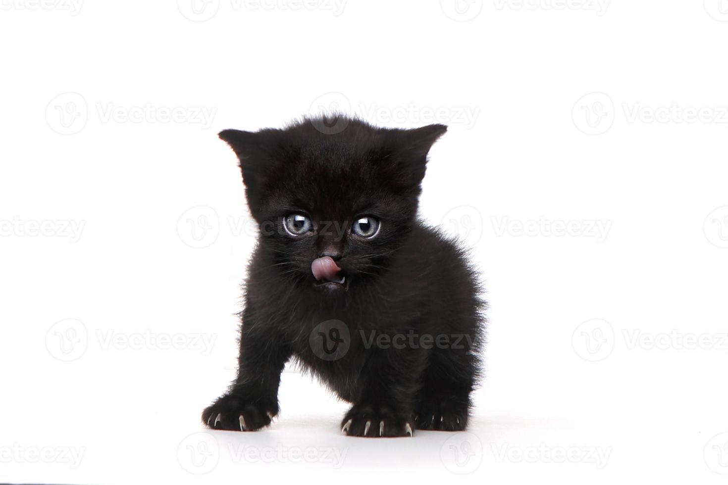 enkele zwarte kitten op witte achtergrond met grote ogen foto