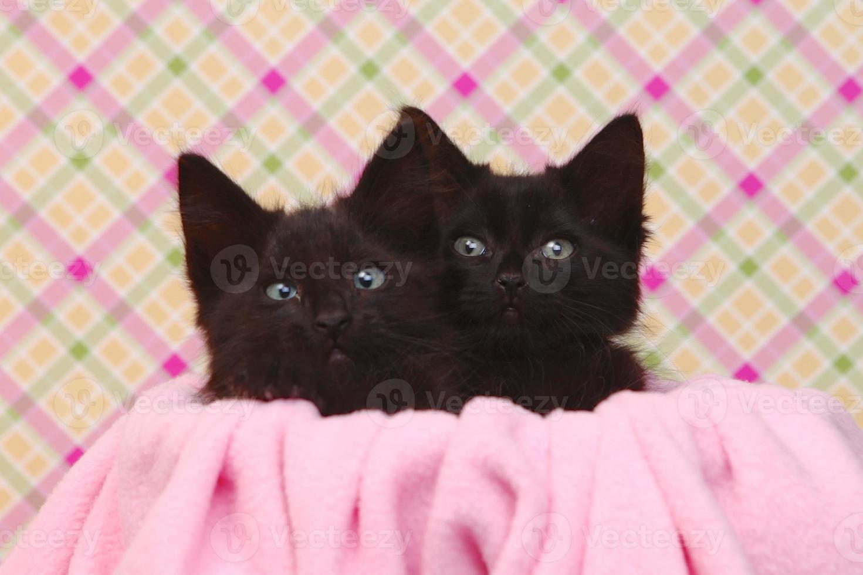 schattige zwarte kittens op roze mooie achtergrond foto