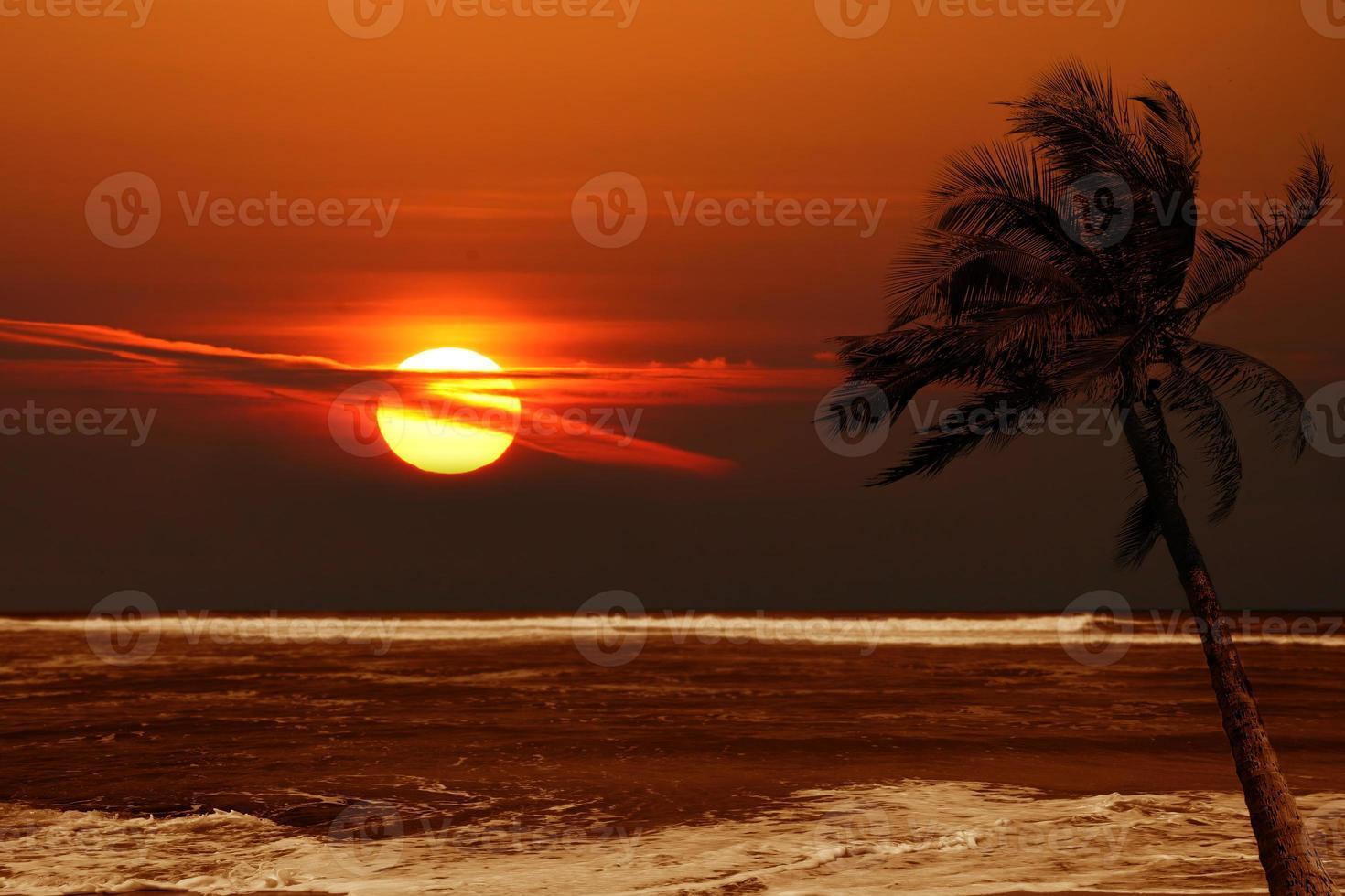 eenzame palmboom bij zonsopgang met dramatische kleuren foto