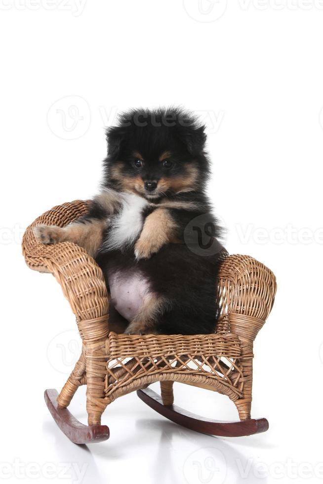 uppy zittend in een miniatuur rieten stoel poseren foto