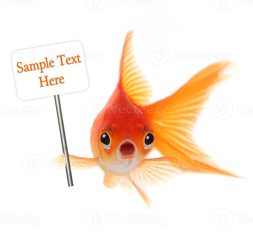 geschokte goudvis die op witte achtergrond wordt geïsoleerd foto