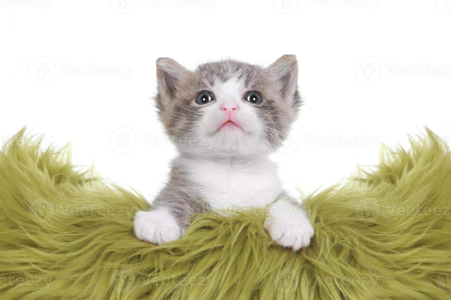 kitten portret in studio op witte achtergrond foto