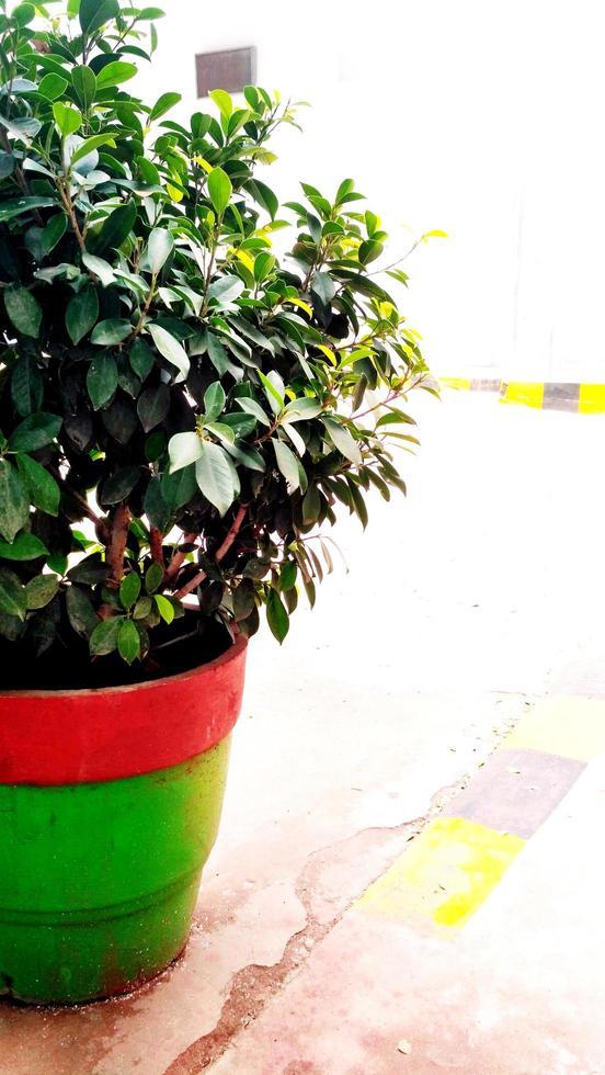 kleine plant in een pot foto