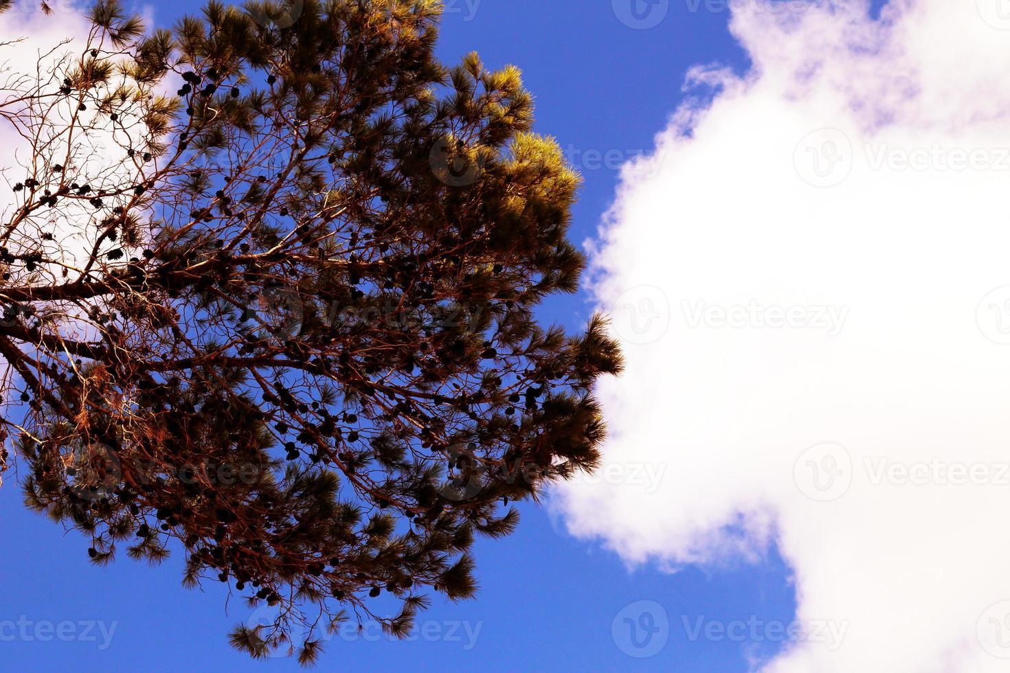 onderaanzicht van een rode boom met wolken en blauwe lucht op de achtergrond foto