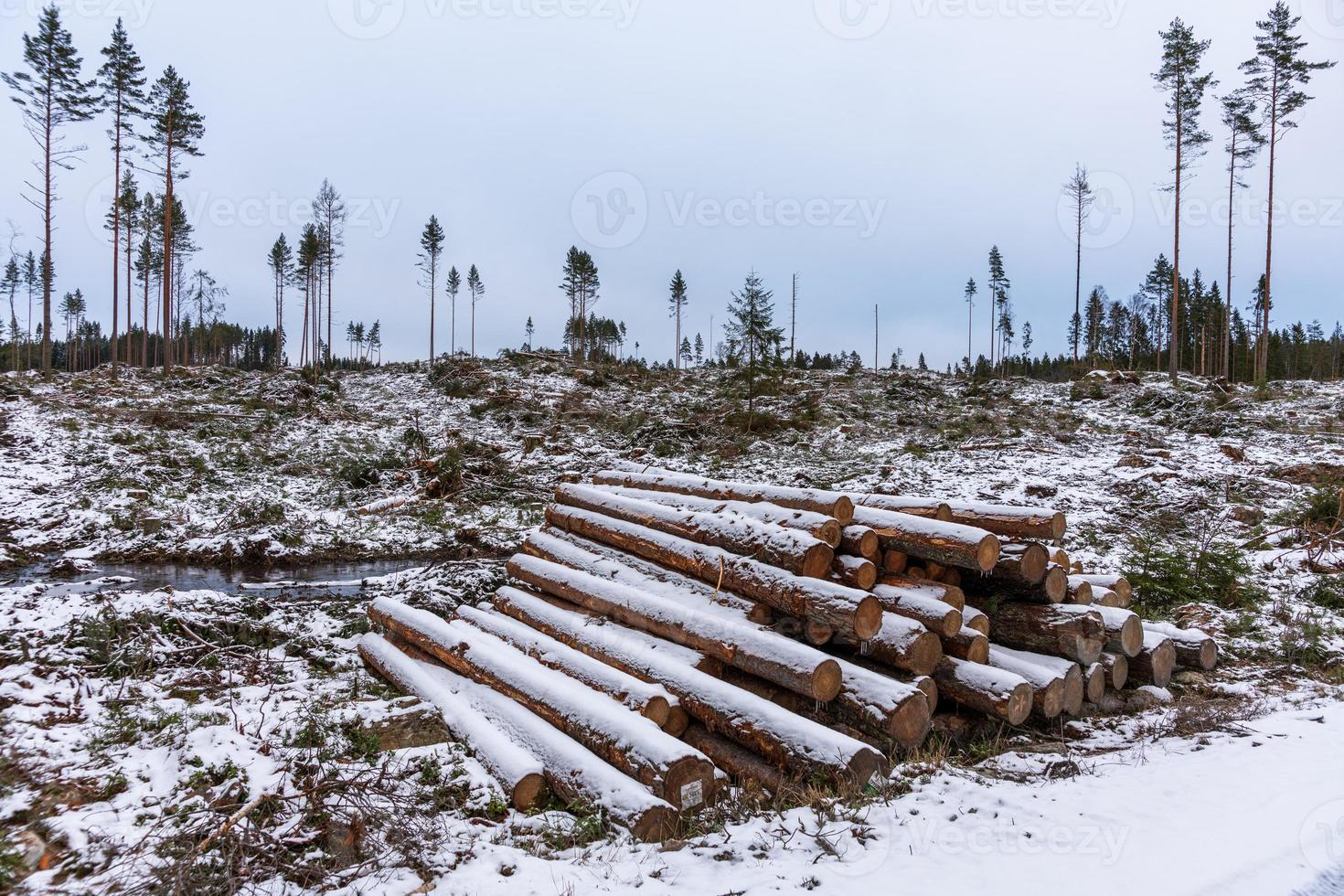 ontbossing gebied in een winter koud zweden foto