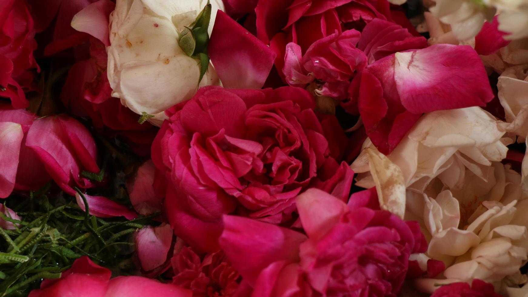 close-up rode rozen worden gebruikt voor traditionele evenementen foto