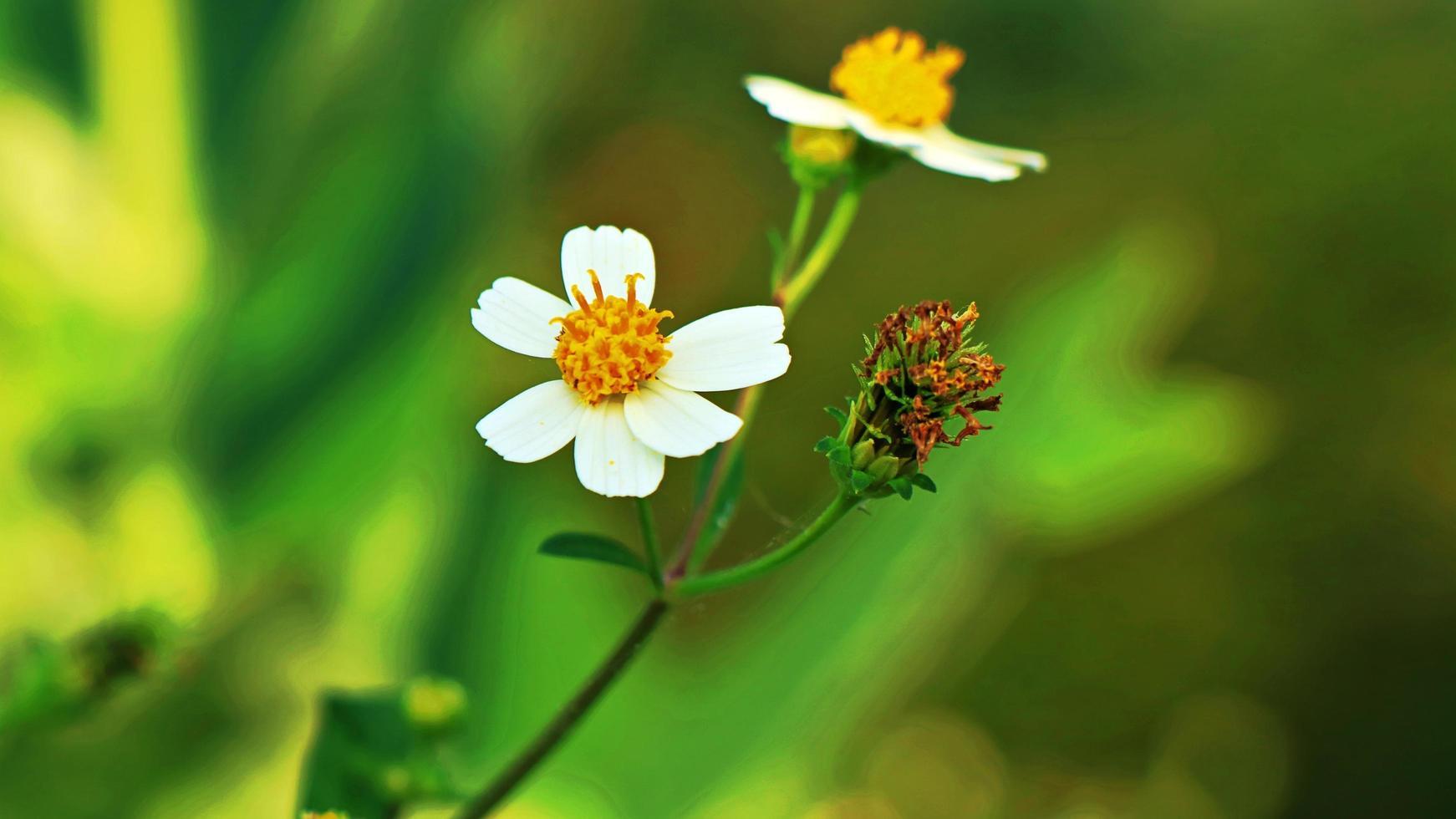 kleine witte bloemen op een groene achtergrond foto