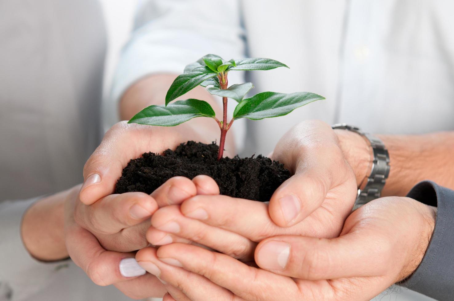 zakelijke groei plant foto