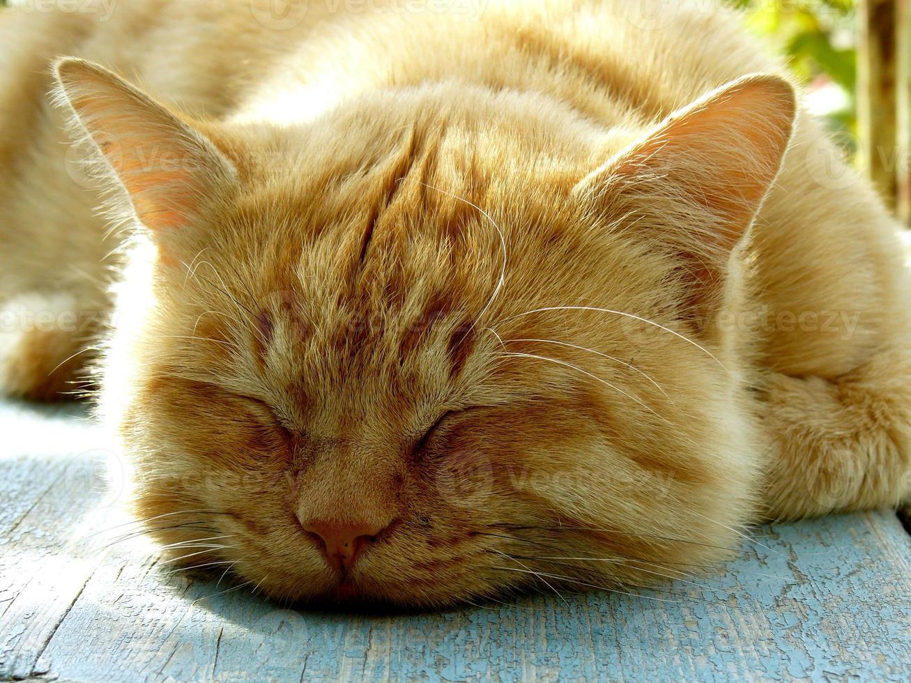slapende kat foto