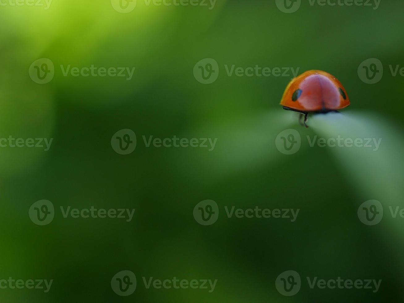 rood en groen foto