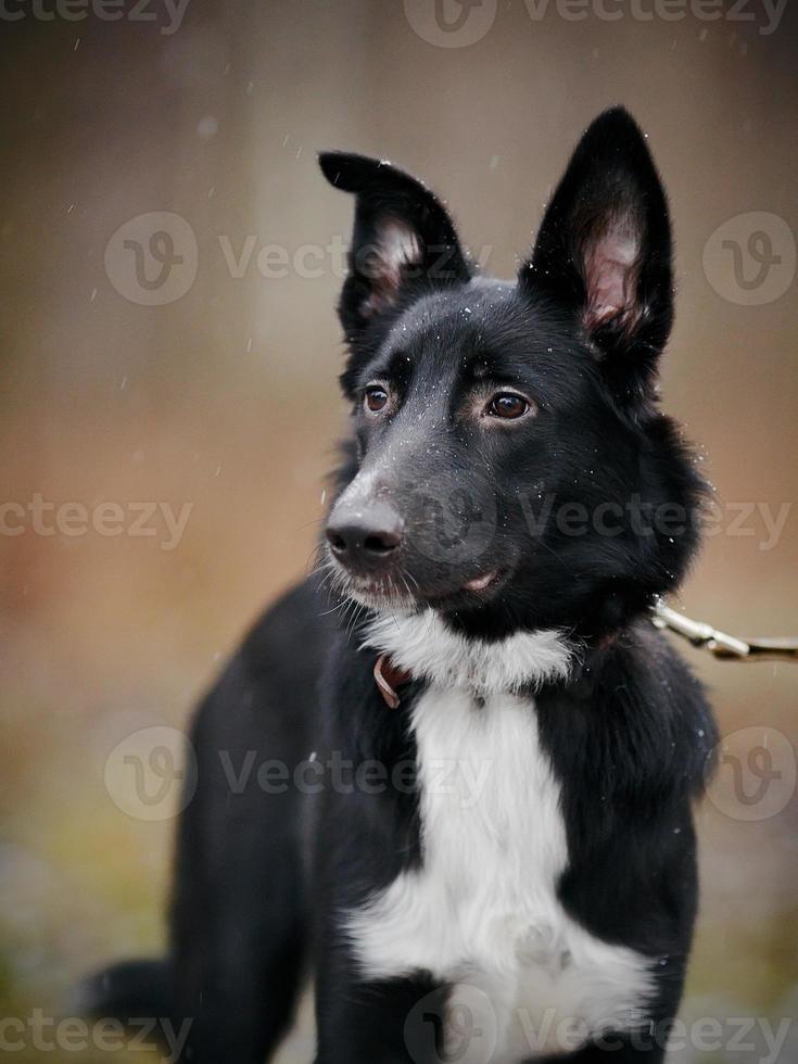 portret van een zwarte hond. foto
