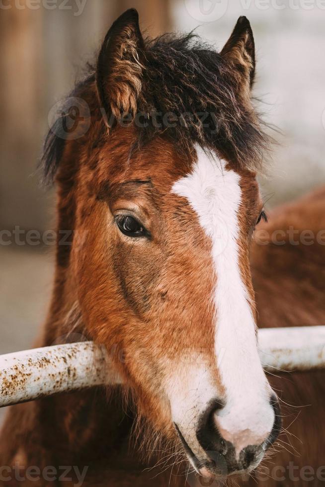 close-up portret van bruin veulen foto